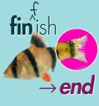Fin-end